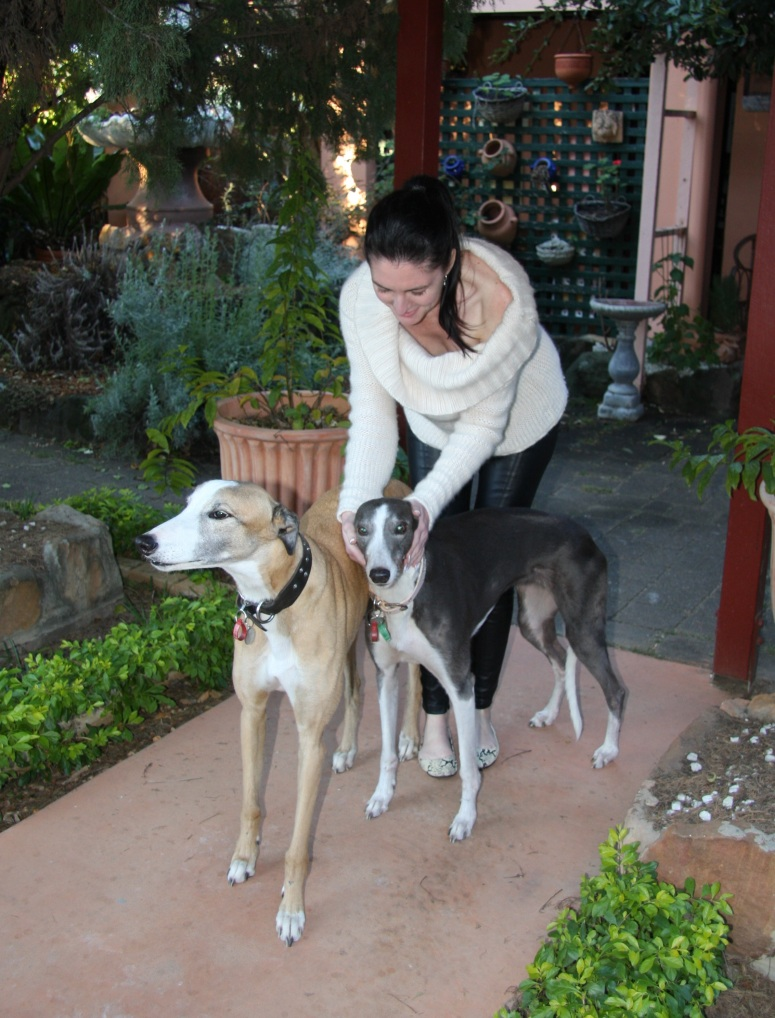 Greyhounds 2